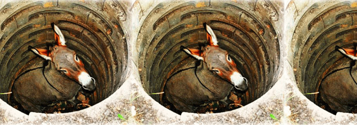 donkey in a hole