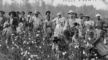 19th century cotton pickin